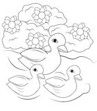 Ducks swimming in the pond coloring page Stock Photo