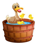 Ducks taking a bath at the bathtub Stock Photo