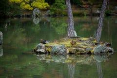 Ducks tree island reflection on water Stock Image