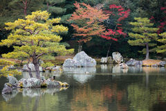 Ducks tree island reflection on water Stock Photos