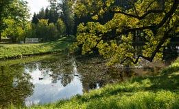 Ducks in Upper ponds of Catherine Park Stock Image