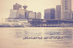 Ducks on Vancouver downtown background. Stock Photo