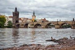 Ducks on the Vltava River Royalty Free Stock Photos