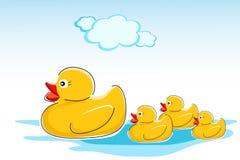 Ducks in water Stock Image