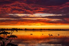 Ducks in the water during a dazzling sunset on lake Zoetermeerse Plas, Zoetermeer, netherlands. Ducks swimming in the water during a dazzling sunset on lake royalty free stock photography