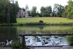 Ducks. In the water on a summer evening Royalty Free Stock Images