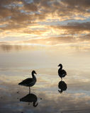 Ducks in the water, tranquil sunset scenery Royalty Free Stock Photos