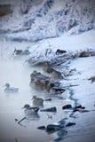 Ducks in the winter Stock Photo