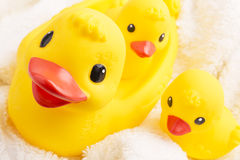 Ducks3 Stock Photos