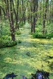 Duckweed и деревья Стоковые Фотографии RF