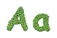 Duckweed alphabet letters A Royalty Free Stock Photos