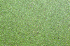 Duckweed background Royalty Free Stock Images