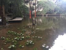 Duckweed in the scenic pond. ,Hanging auspicious red lanterns Stock Photo