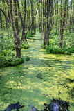 Duckweed and trees Royalty Free Stock Photos
