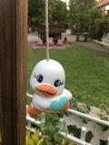 ducky fotografía de archivo libre de regalías