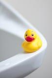 Ducky Imágenes de archivo libres de regalías