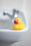 Ducky. Sitting on edge of a white basin royalty free stock image
