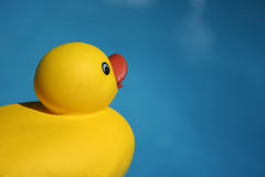 Ducky. Time to bathe Royalty Free Stock Image