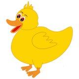 Ducky Royaltyfri Bild
