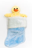 Ducky in Blue Stocking Stock Photo