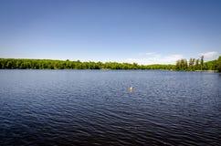 Ducky di gomma in lago Immagine Stock