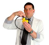 Ducky Goes to the Doctor. Doctor listening to a rubber ducky's head with his stethoscope, all against a white background royalty free stock photos