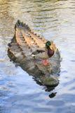 Ducky krokodil stock afbeeldingen