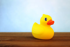 Ducky. Photo of yellow rubber duck with blue background Royalty Free Stock Images