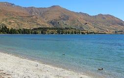 Ducs na Wanaka jeziorze Zdjęcia Stock