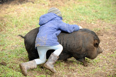 Dude play with black pig. Children graze and play with a large boar and a small suckling pig Hungarian mangalitsa on a rural farmstead in early spring stock photography