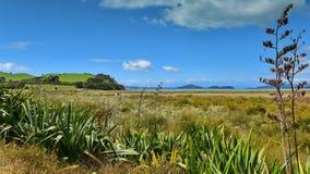 Duder Regional Park, a coastal farm park in New Zealand stock images