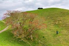Duder Regional Park, a coastal farm park in New Zealand royalty free stock photography
