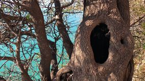 Dudniącego drzewa zbliżenia wody morskiej natury niecka zbiory wideo