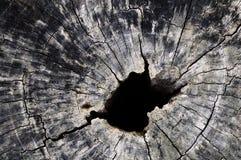 Dudniący drzewo Zdjęcia Royalty Free