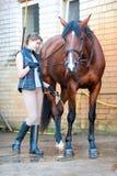Dueño bonito de la chica joven que se lava las piernas preferidas del ` s del caballo de bahía Fotografía de archivo