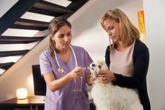 Dueño del veterinario y del perro que da la droga de la medicina al perro imagenes de archivo