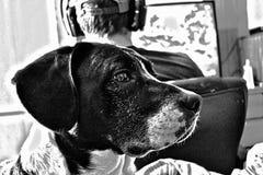 Dueño ocupado aburrido del perro imagen de archivo