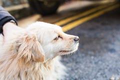 Dueño que acaricia suavemente su perro foto de archivo libre de regalías