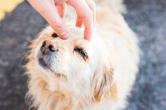 Dueño que acaricia suavemente su perro fotografía de archivo
