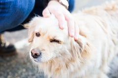 Dueño que acaricia suavemente su perro imagen de archivo libre de regalías
