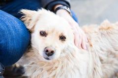 Dueño que acaricia suavemente su perro imágenes de archivo libres de regalías