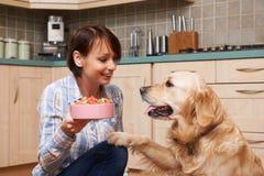 Dueño que da la comida del golden retriever de las galletas de perro en cuenco Imagen de archivo
