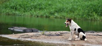 Dueño que espera aburrido del perro Imagen de archivo libre de regalías