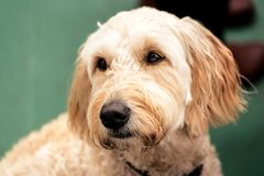 Dueño que espera del perro hermoso para imágenes de archivo libres de regalías