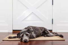 Dueño que espera del perro triste para Fotos de archivo libres de regalías