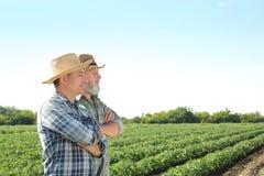 Due agricoltori che stanno nel campo con le piante verdi Immagini Stock Libere da Diritti