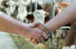 Due agricoltori che stringono le mani in bestiame stabile Fotografie Stock
