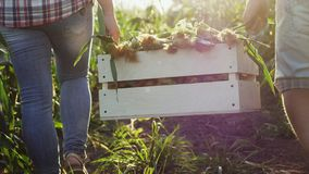 Due agricoltori portano il cereale in una scatola di legno archivi video