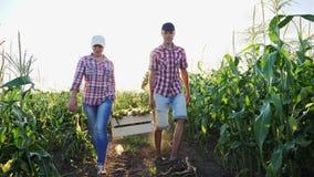 Due agricoltori portano il cereale in una scatola di legno al tramonto stock footage