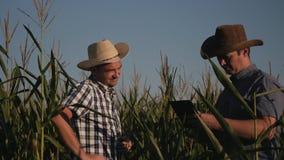 Due agricoltori in un controllo del campo di grano la qualità delle piante di cereale Video al tramonto stock footage